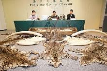 香港货柜码头查出价值4,100万走私象牙犀角以及豹皮