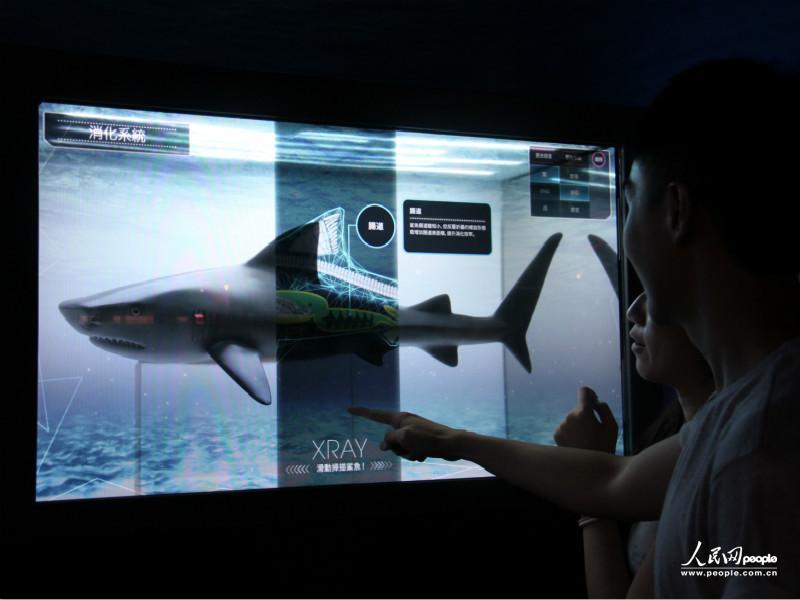 点击屏幕可了解鲨鱼身体结构及冷知识(摄影:计梦慧)