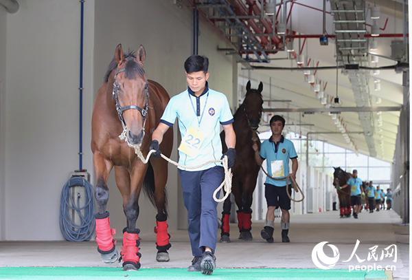 赛驹运抵从化马匹训练中心。